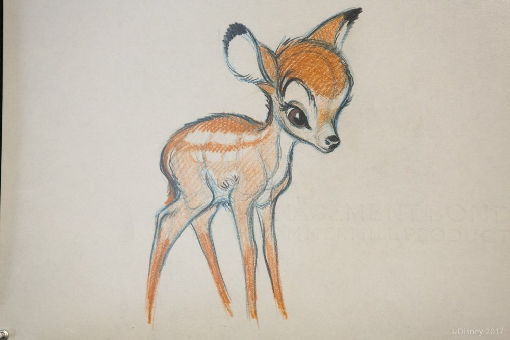 Original sketch of Bambi shown during Interview With The Voices of Disney's Bambi and Thumper.