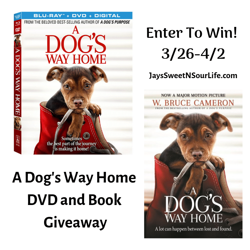 """Enter to win in my A Dog's Way Home DVD and Book Giveaway. am very excited to partner with Sony Pictures to bring you my """"A Dog's Way Home"""" DVD and Book Giveaway! This touching film shares Bella's heartwarming adventure as she embarks on an epic 400-mile journey back home."""