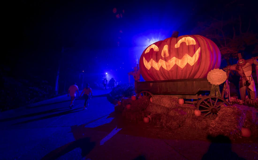 Busch Gardens Howl-O-Scream Pumpkin. As the temperatures cool down the fun heats up as Busch Gardens® Williamsburg's Howl-O-Scream® returns as one of the best Halloween-themed events on the east coast. Read what to expect at their 2019 Howl-O-Scream event along with all the new additions!