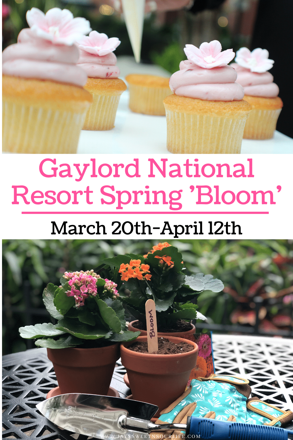 Gaylord National Spring Bloom. Beginning onMarch 20ththrough April 12th,Gaylord National Resortis bringing backBloom, a four-week celebration full of spring-focused activities. With endless offerings inside the resort, guests can also enjoy the beautiful sight of over 100 cherry blossom trees adorning the National Harbor.