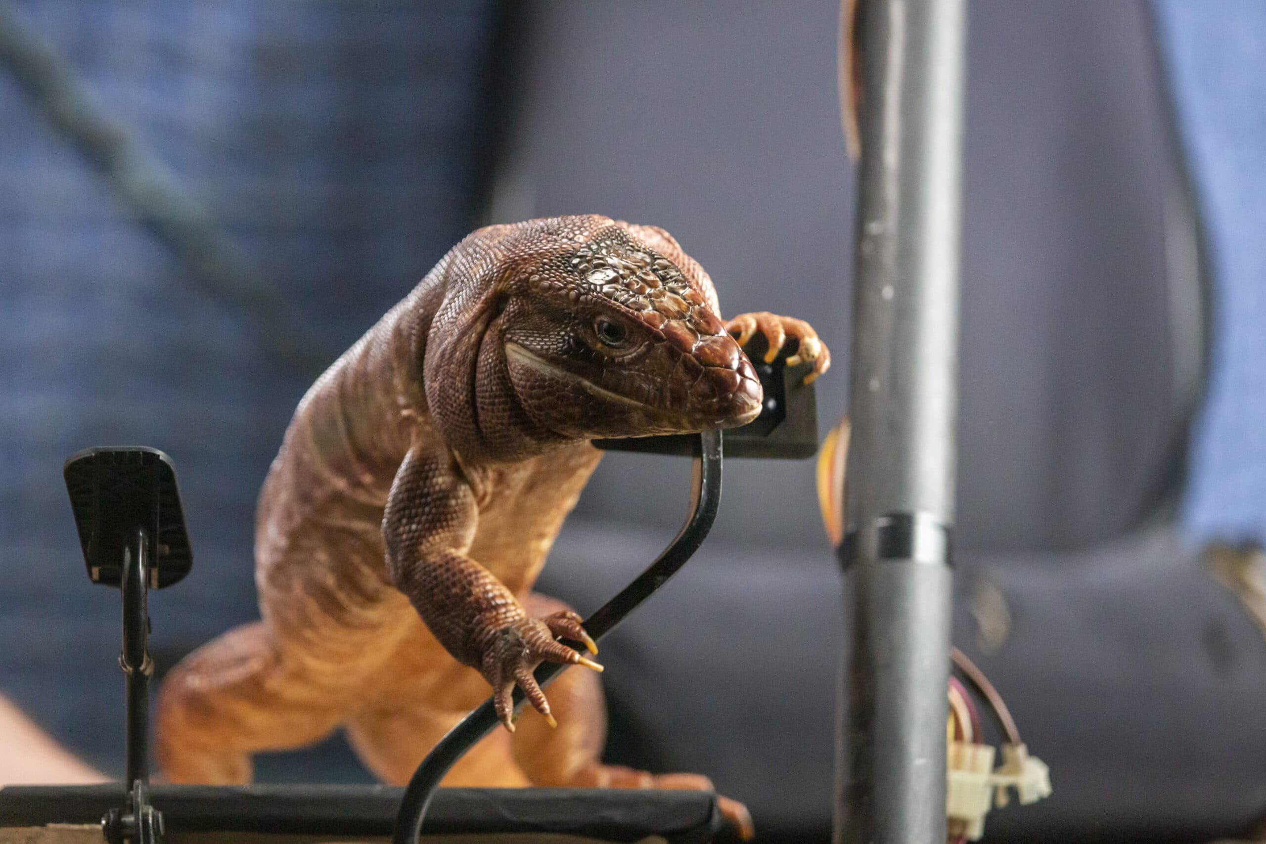 Cats & Dogs 3 Lizard. Discover who has the upper paw in Cats & Dogs 3: Paws Unite!,the next feature-length installment of the popular Cats & Dogs franchise from Warner Bros. Home Entertainment. Available on Digital on September 15 and on both Blu-ray Combo Pack and DVD on October 13.